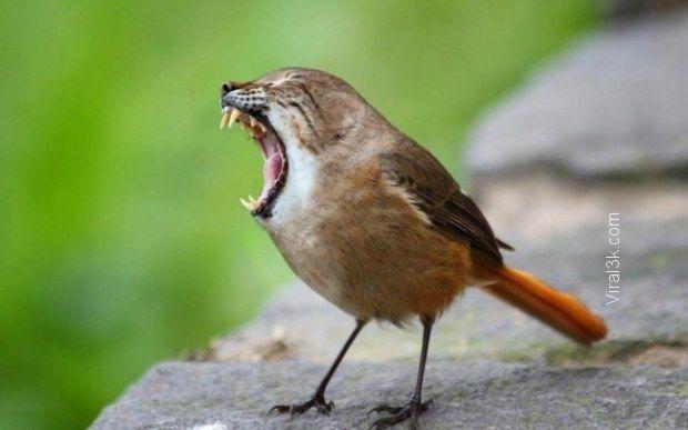 Tabby Sparrow